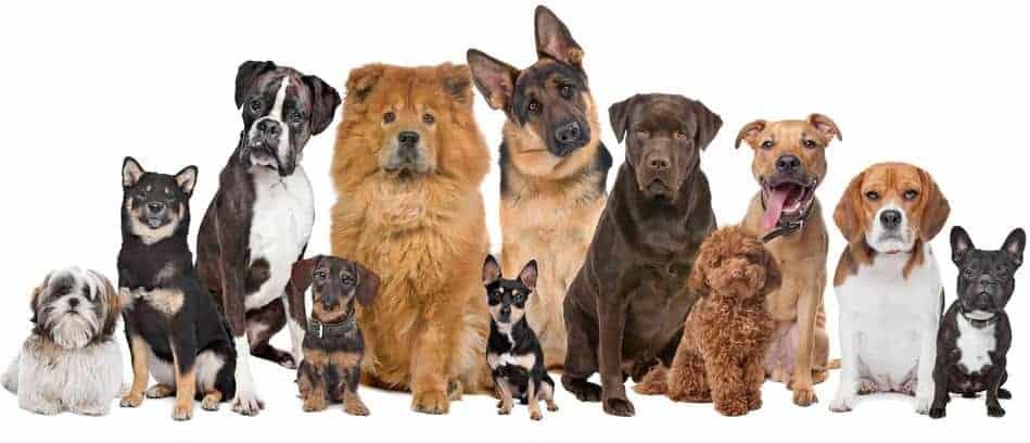 Types of Dog Shock Collars