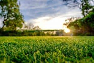 Full Body Aroma - dirt and grass