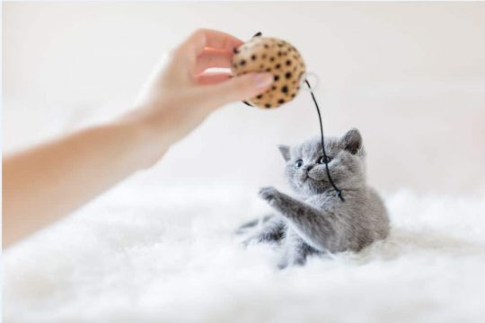 Games You Can Play with Your Cat