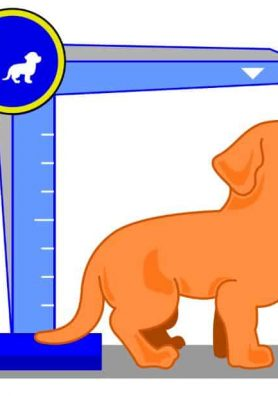 How Old is Your Dog