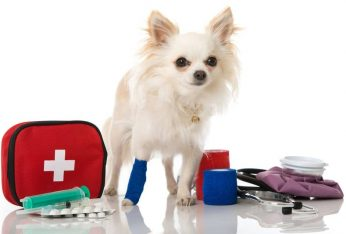 Must Haves for Your Emergency Kit