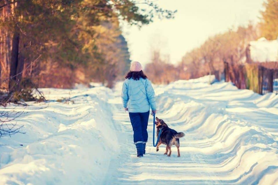 Petrainer Waterproof & Rechargeable Dog Training Collar
