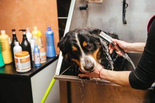 Reasons to Groom Your Dog Regularly - Bathe your dog