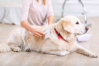 Reasons to Groom Your Dog Regularly - Brush the dog
