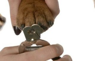Reasons to Groom Your Dog Regularly - Clip its nails