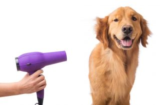 Reasons to Groom Your Dog Regularly - Dry the dog