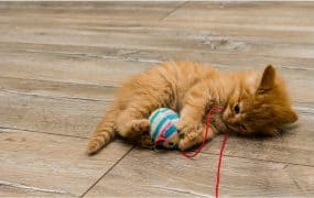 Shopping Guide for the Best Cat Toy