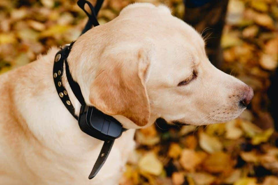 Shopping Guide for the Best Dog Shock Collar