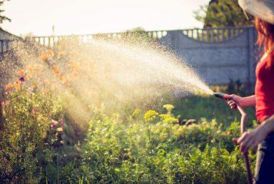 Shopping Guide for the Best Garden Hose