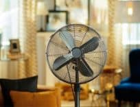 Should You Buy it - Invest in fans