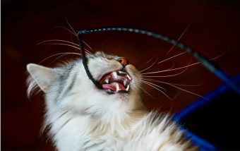 Signs Your Cat Could Benefit from New Toys - 2