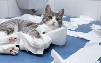 Signs Your Cat Could Benefit from New Toys - 3(1)