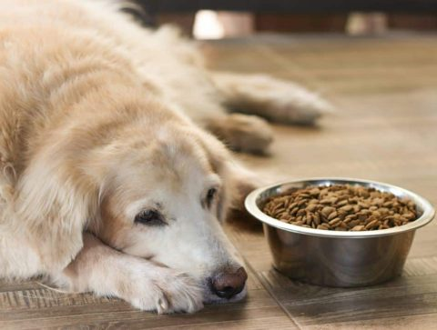 Tips for Feeding Your Dog