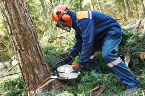 Tips for Safely Using a Chainsaw