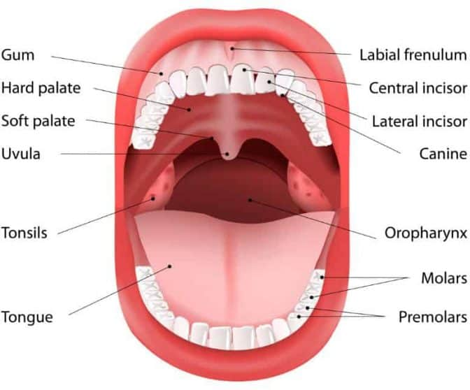 Tips for Taking Care of Your Teeth Every Day