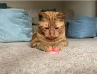 Types of Cat Toys - laser pointer