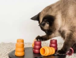 Types of Cat Toys - puzzle toys