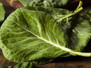 Types of Juicers - Collard greens