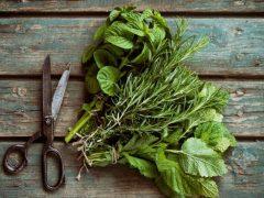 Types of Juicers - Fresh herbs