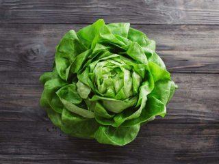 Types of Juicers - Lettuce