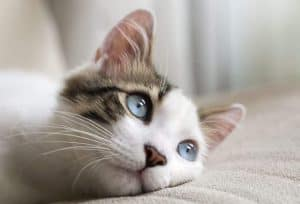 Unusual Uses for Instant Coffee - control your cat