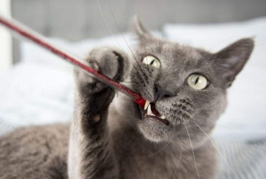 What Not to Give Your Cat - 2(1)