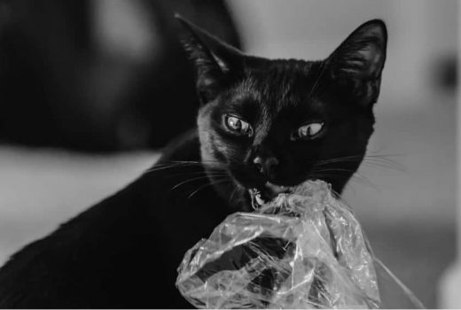 What Not to Give Your Cat - plastic bag(1)