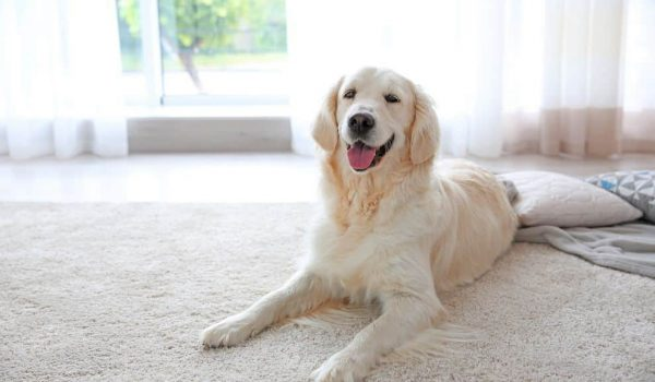 What is the Average Price for a Cordless Vacuum - your pet